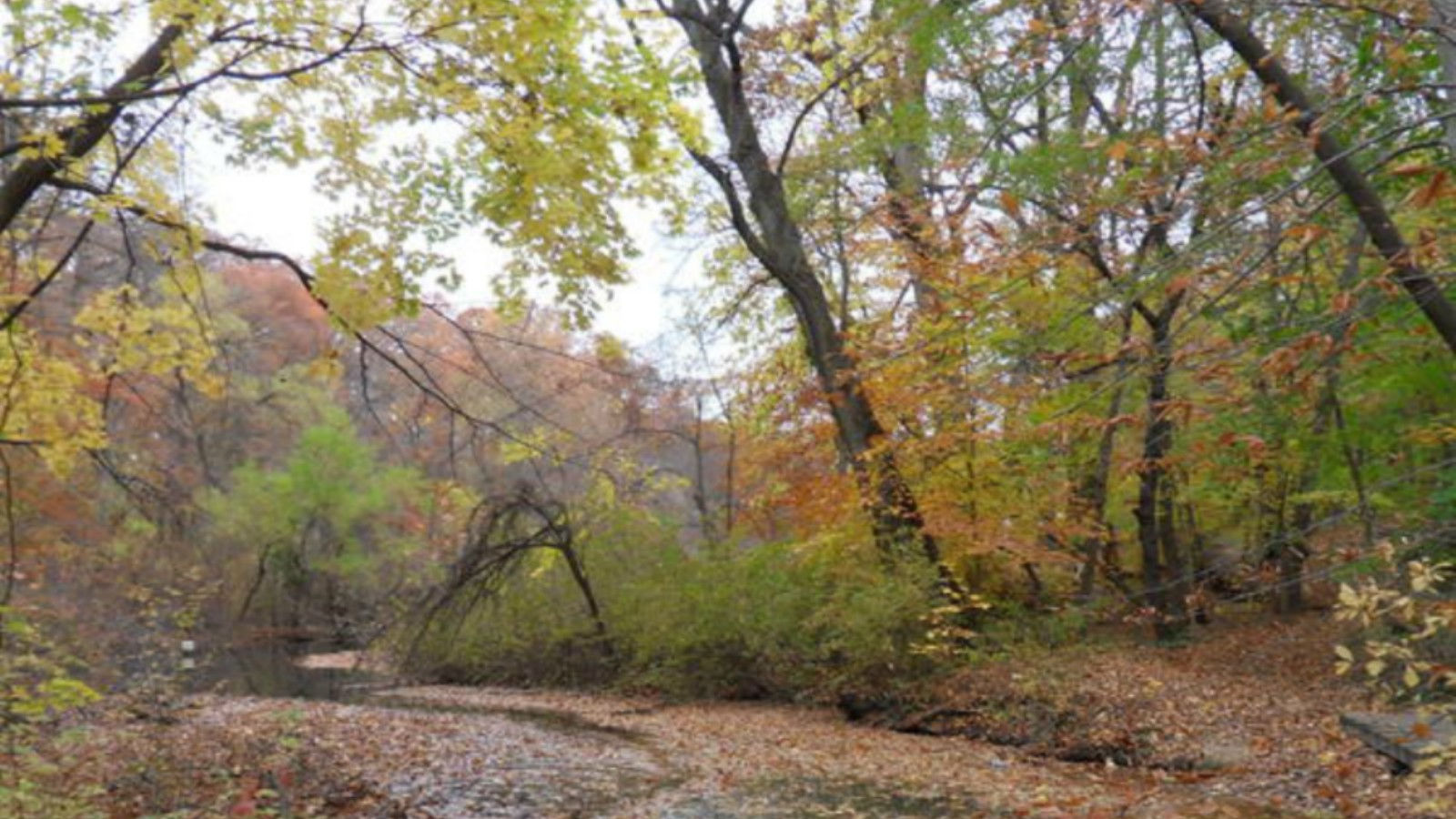 Things to do in South Jersey | Wharton State Forest